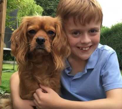These are the UK's BEST dog and owner lookalikes