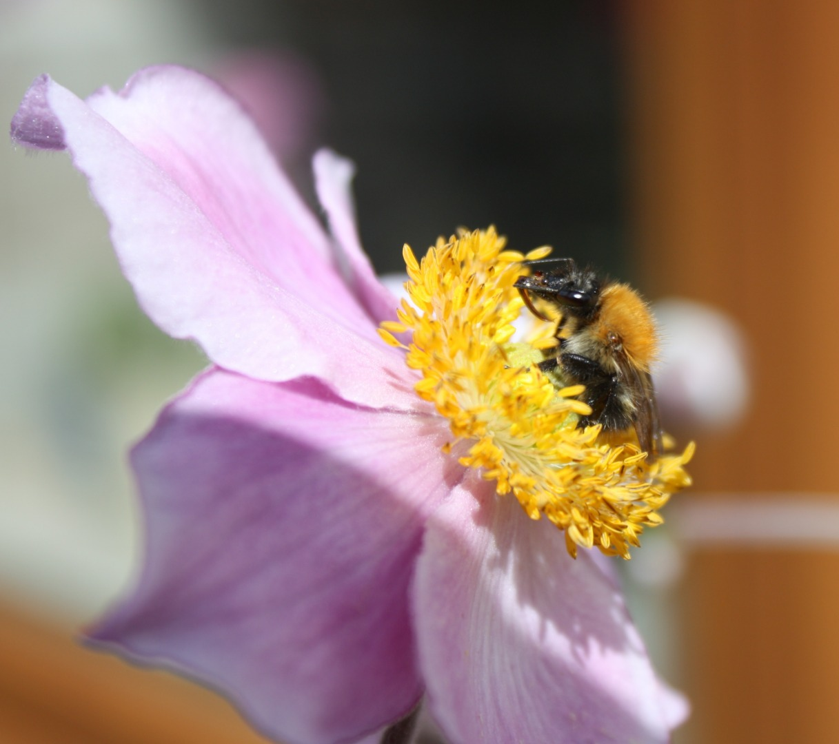 Bees are buzzing this spring